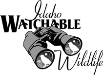 watchable wildife logo