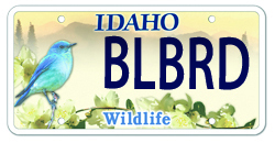 Mountain Bluebird Plate