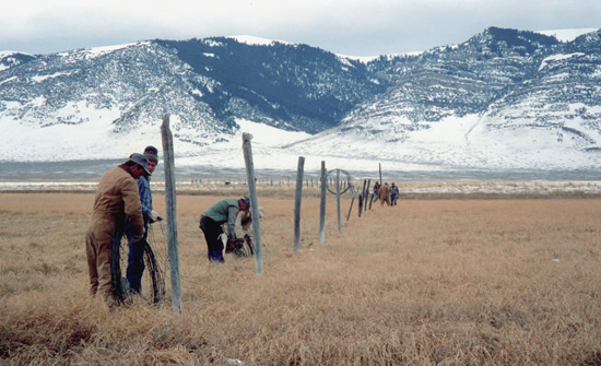 Fence crew on rangeland
