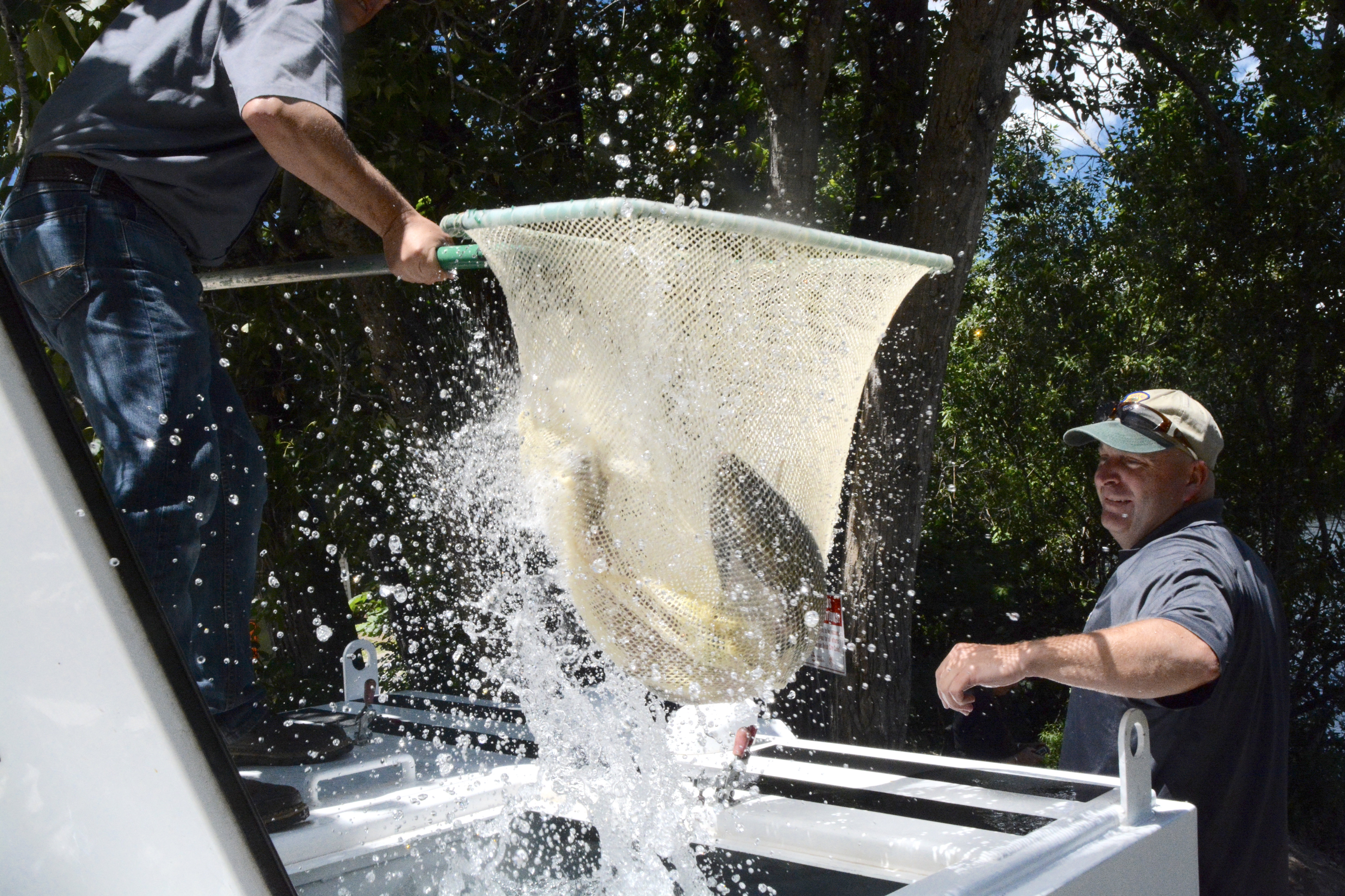More chinook released in the boise river idaho fish and game for Idaho fish and game hunter report