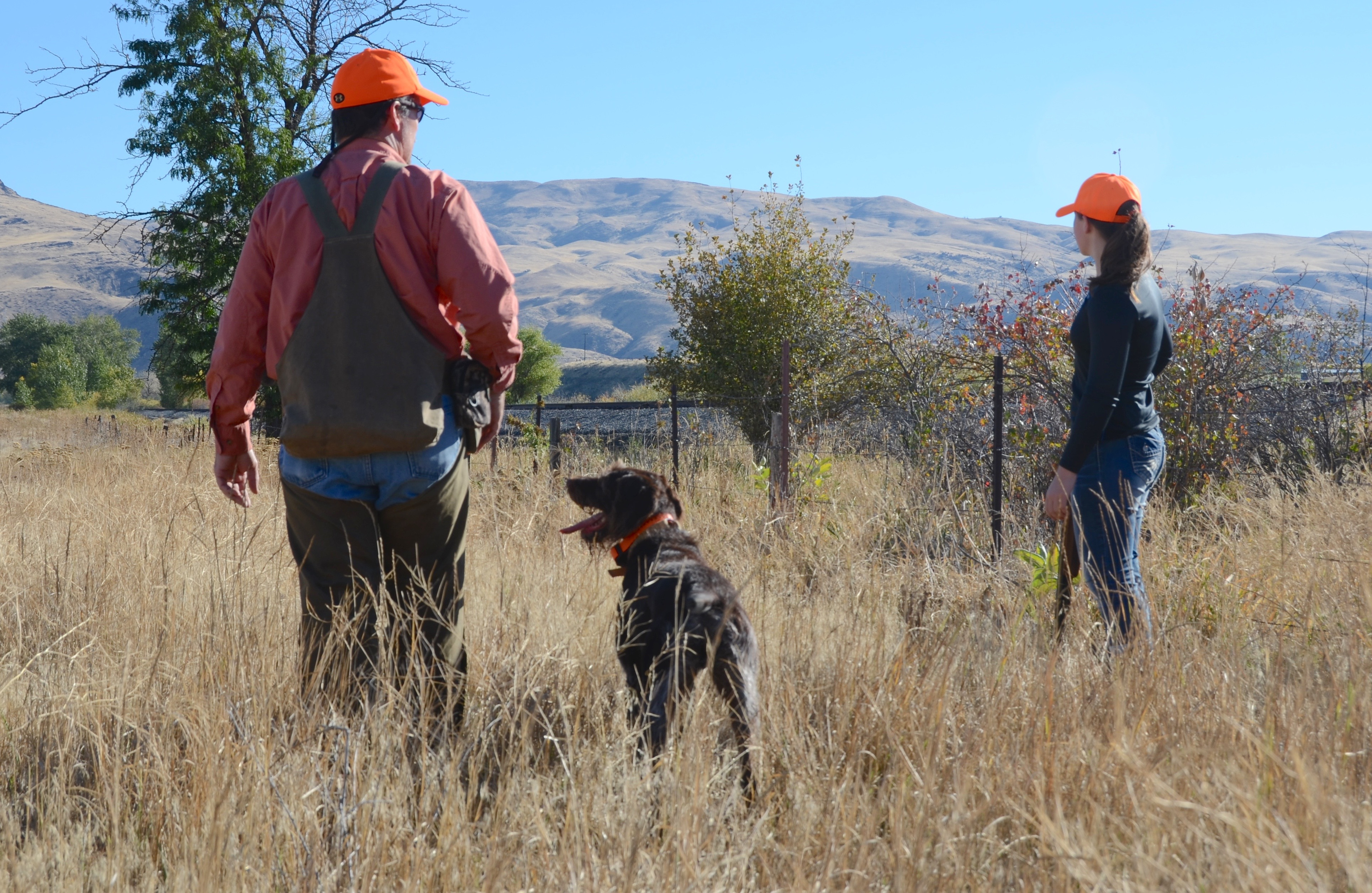 Upland bird forecast above average to average in most of for Idaho fish and game regulations