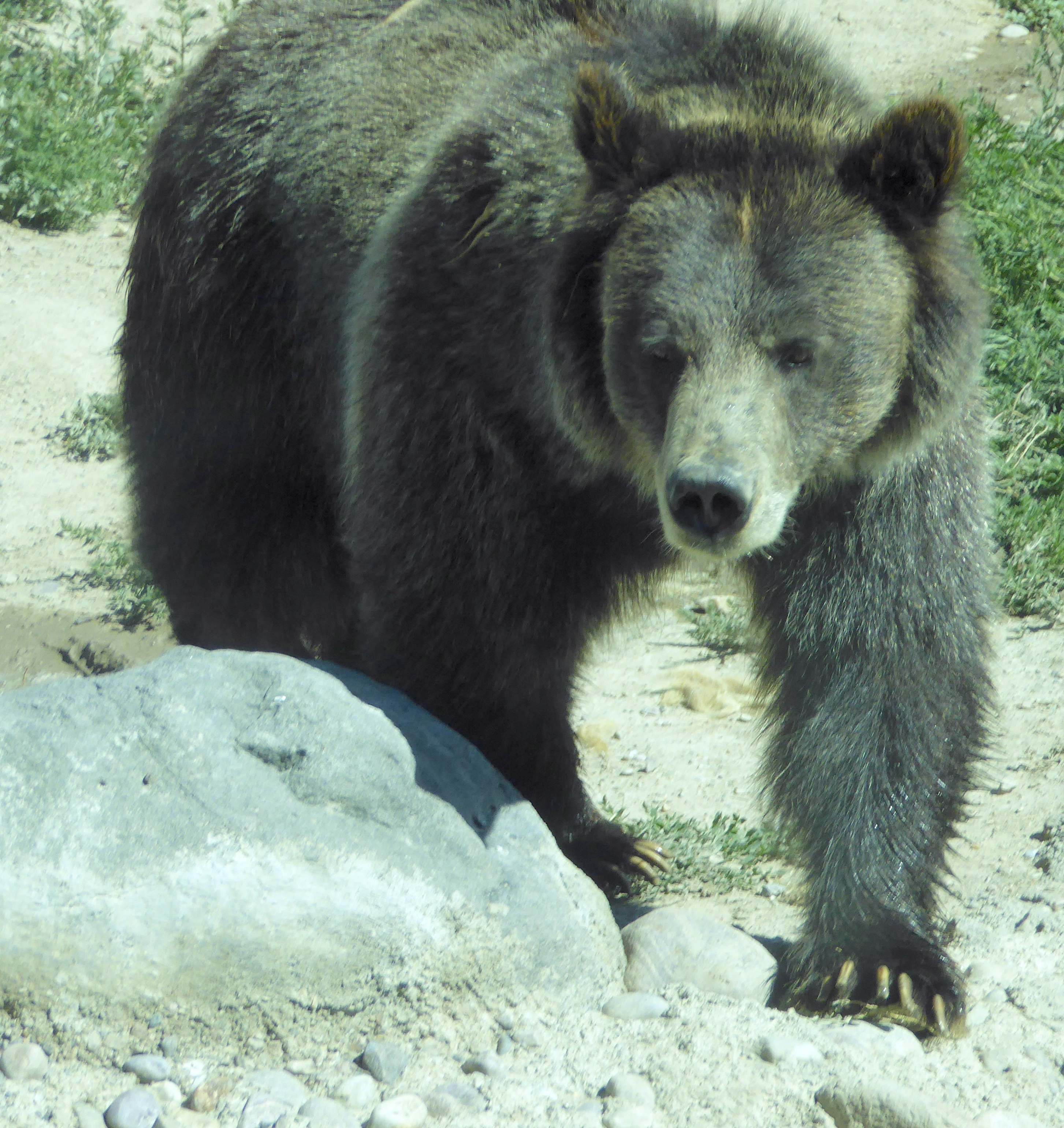 Fish and game will take public comment on proposed grizzly for Idaho fish and game regulations