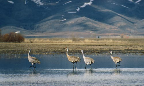 Sandhill crane tags available starting august 1 idaho for Idaho fish and game hunter report