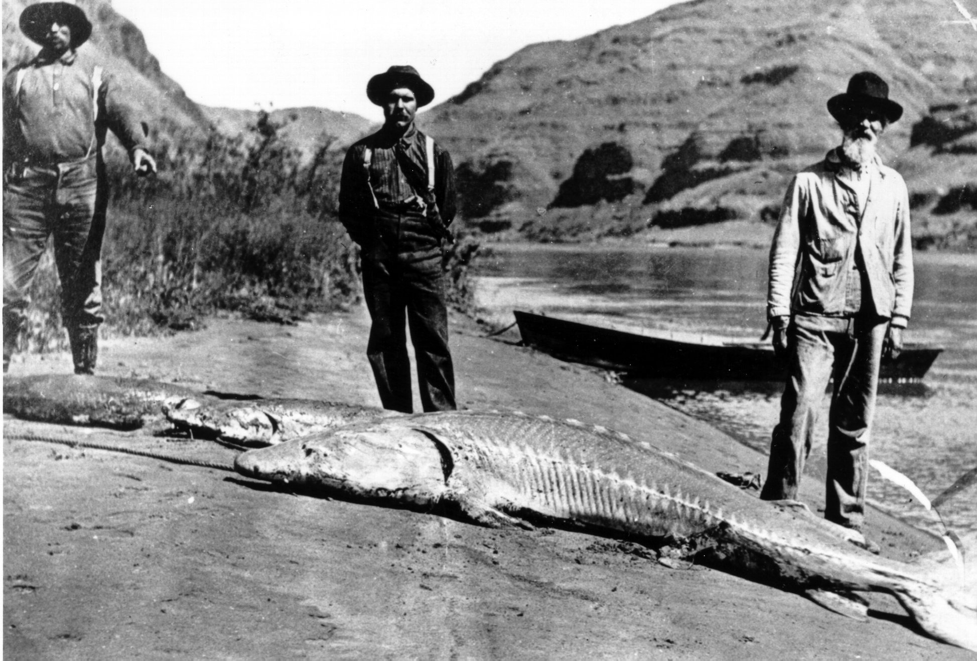 Snake river white sturgeon historic 1