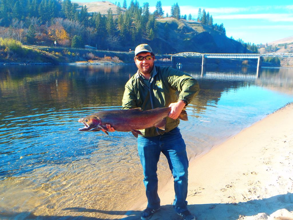 Clearwater steelhead fishing report 11 14 16 idaho for Southeast idaho fishing report