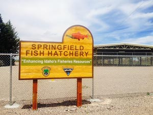 Springfield Fish Hatchery