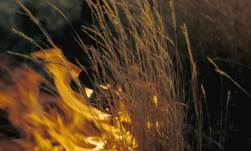 Wildfire in grasses