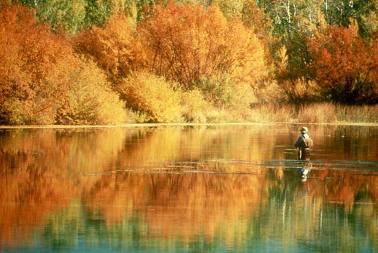 man fishing in a river with Fall colors wide shot small photo