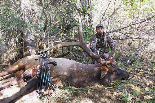 Elk taken illegally with fraudulent license and tag