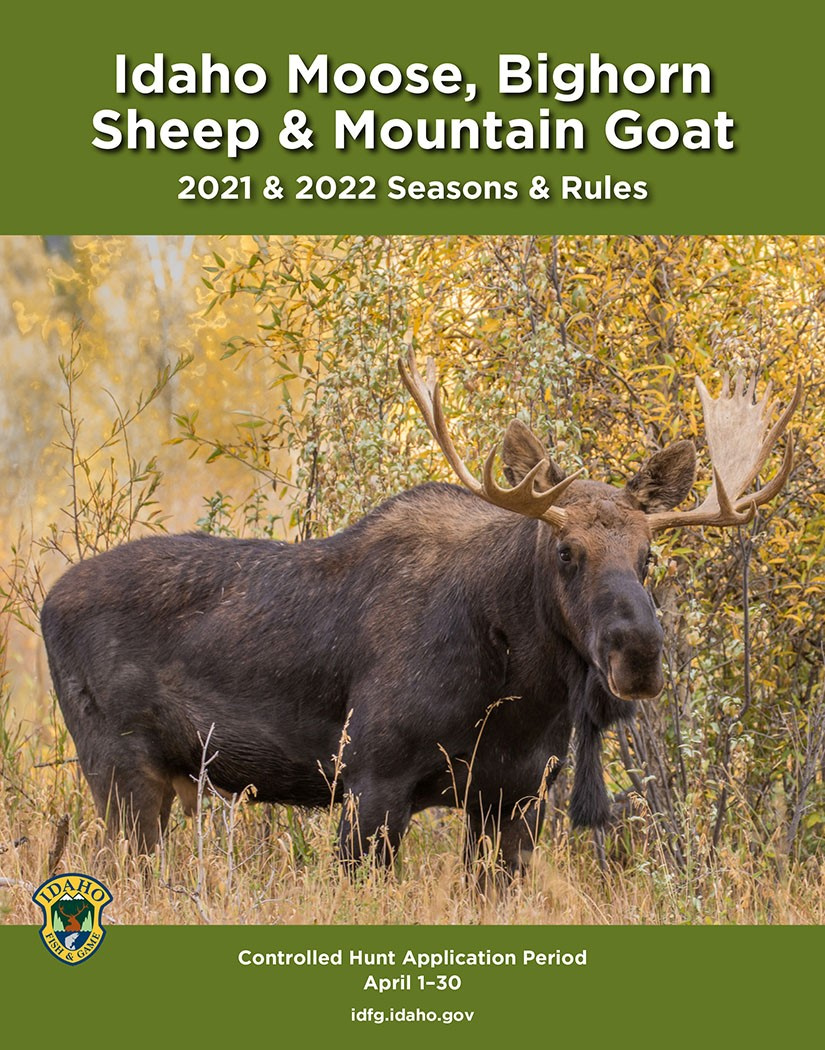 Brochure Cover: Large bull moose stands in tall grass near willows.