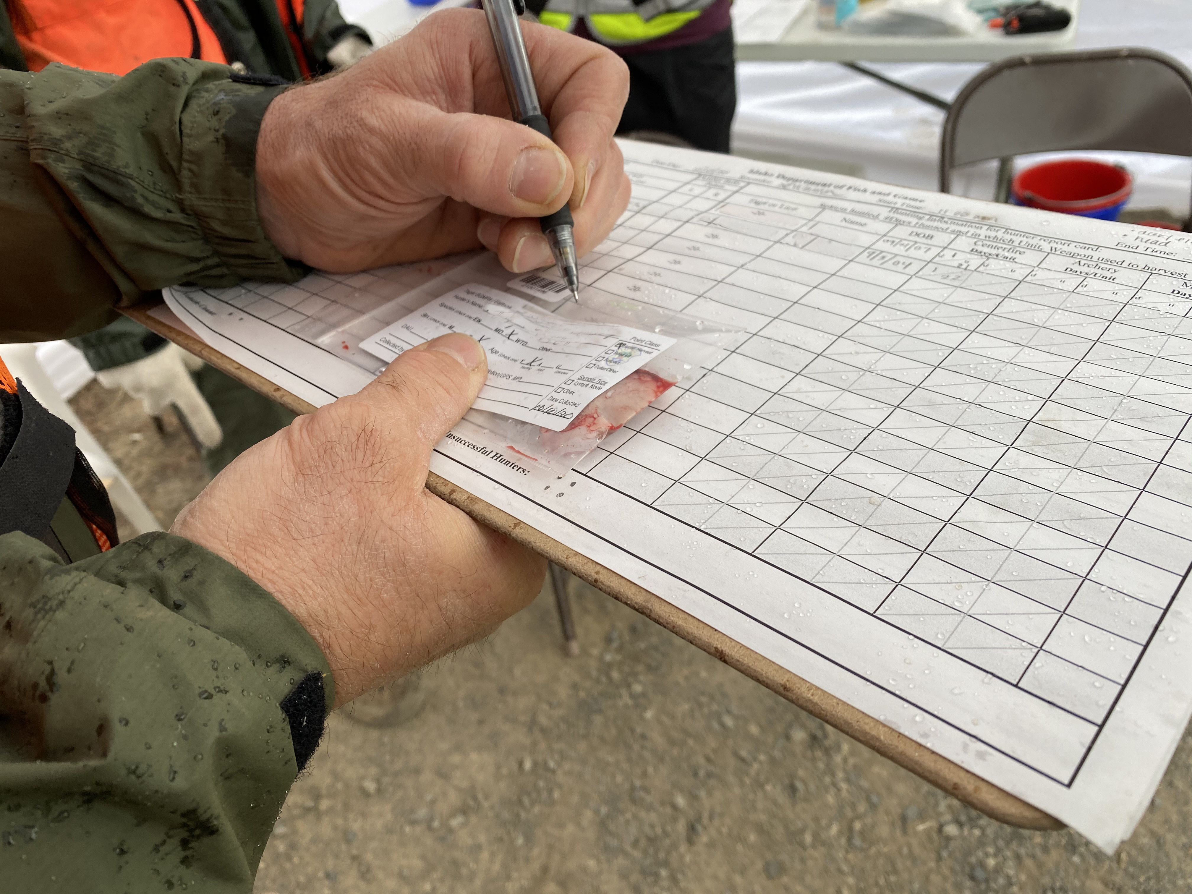 A Fish and Game staff member enters information on a CWD sample bag while holding a clipboard.