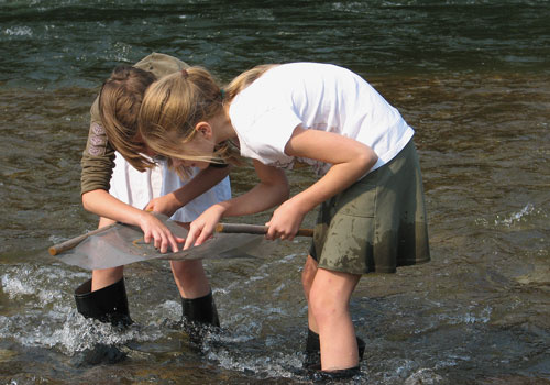 Kids in the Creek class examining aquatic insects