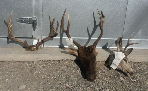 Case evidence elk and deer