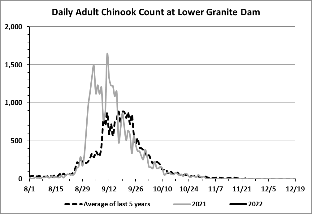 _chinook-count-granite-dam