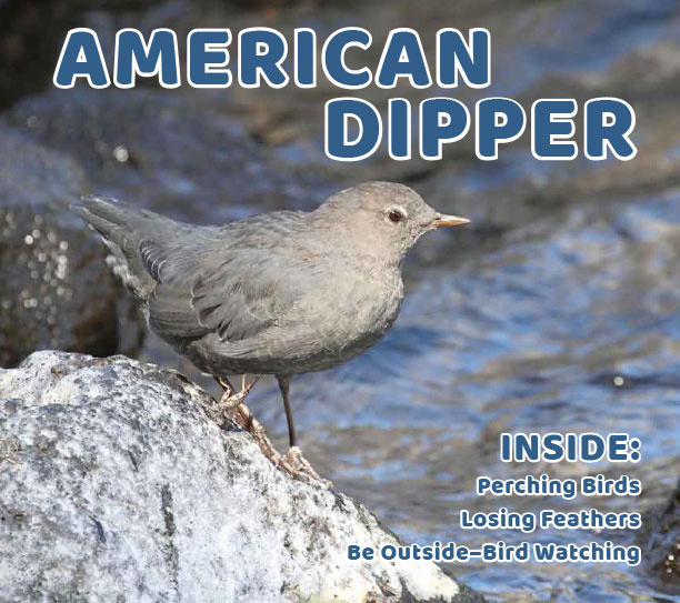 am-dipper-we-apr2019