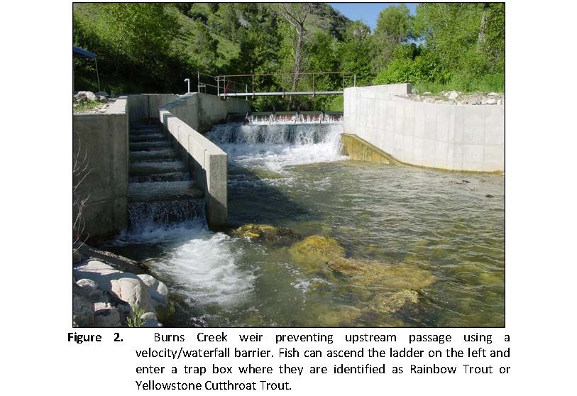 genetic_integrity_of_the_south_fork_snake_river_yellowstone_cutthroat_trout_page_4