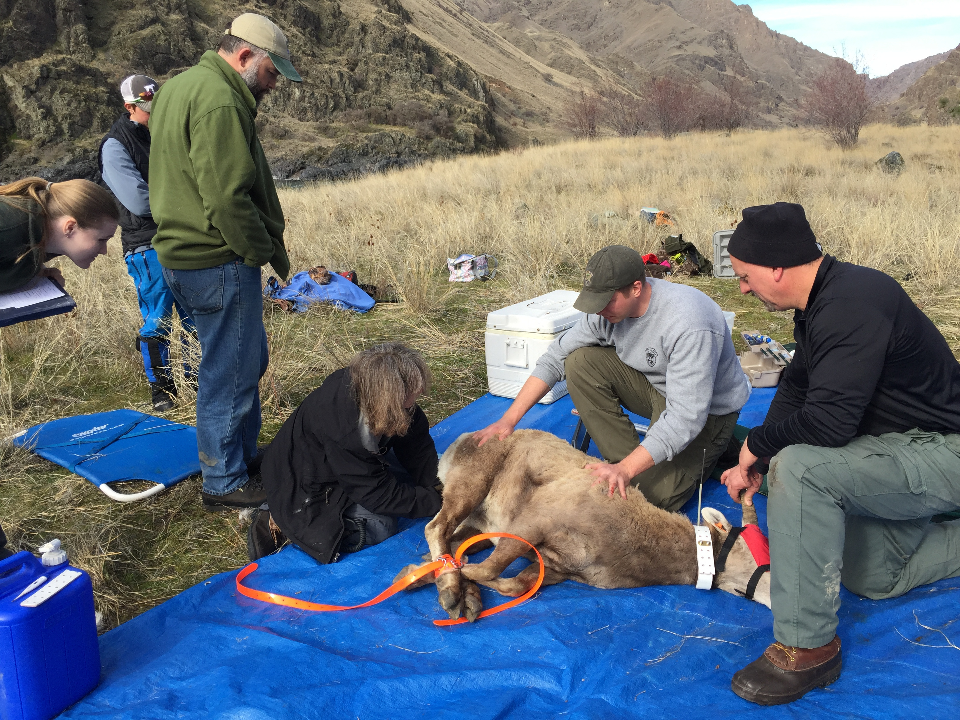 Sheep processing idaho fish and game for Fish and game idaho