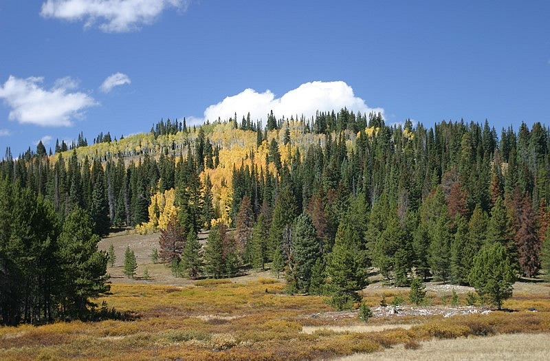 north_fork_aspen_regeneration