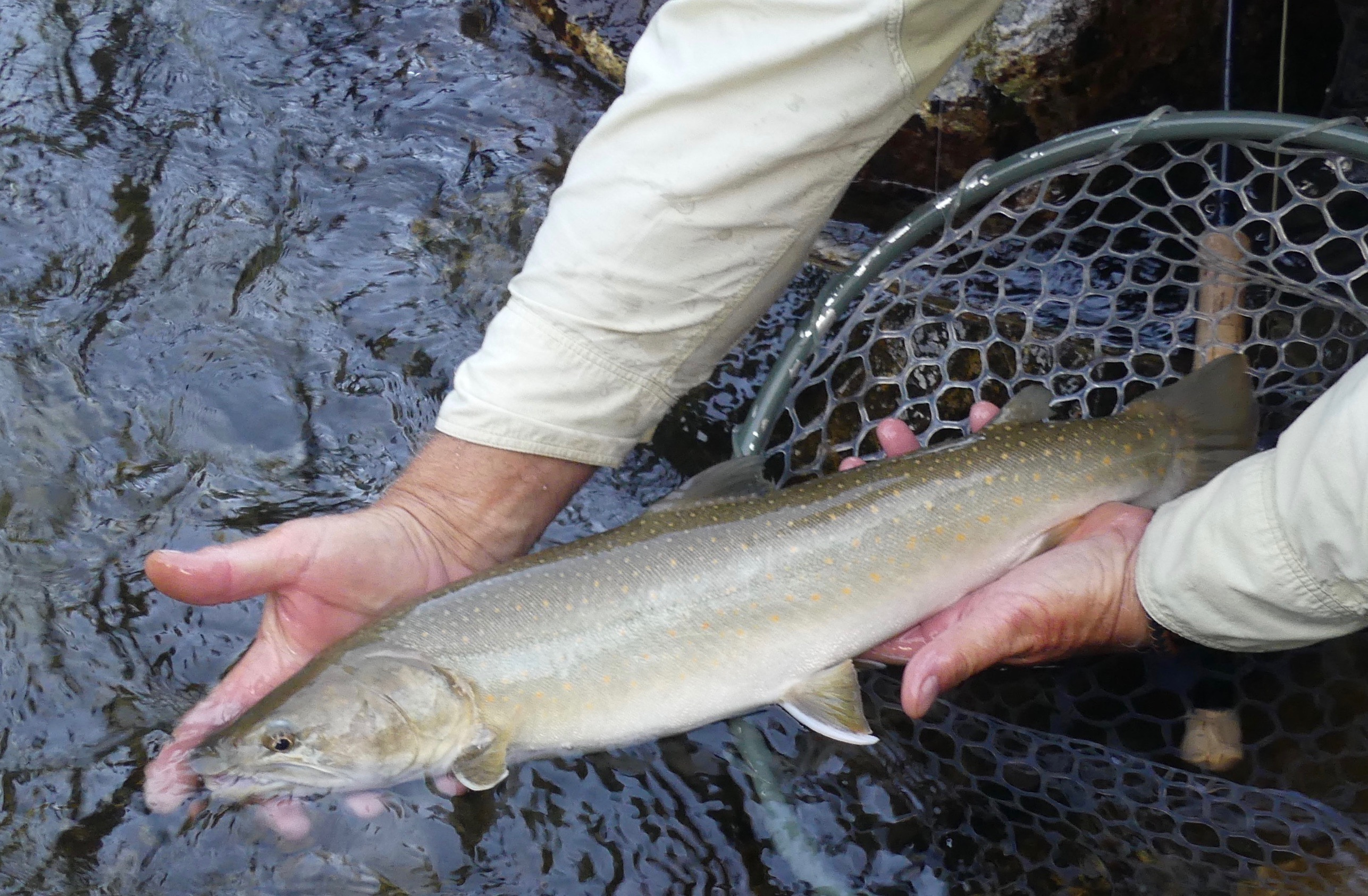 Casting for the bulls: fishing for Idaho's bull trout