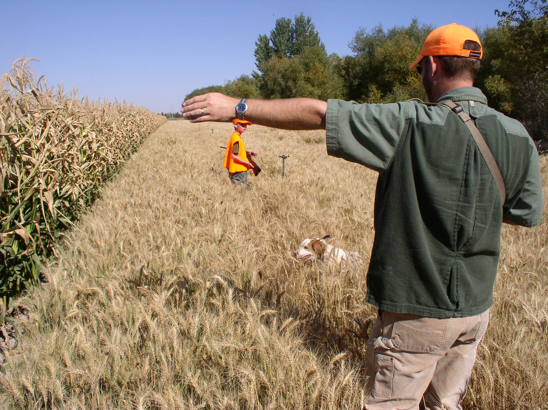 Pheasant hunting with youth