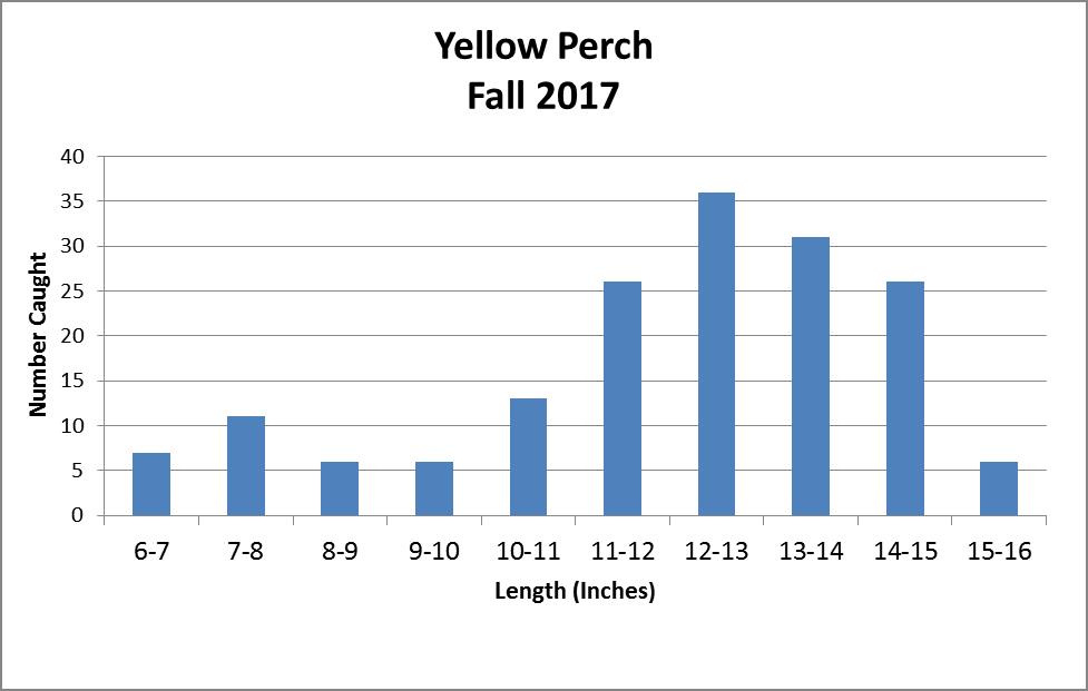 perch_lengths_inches_2017_fall_