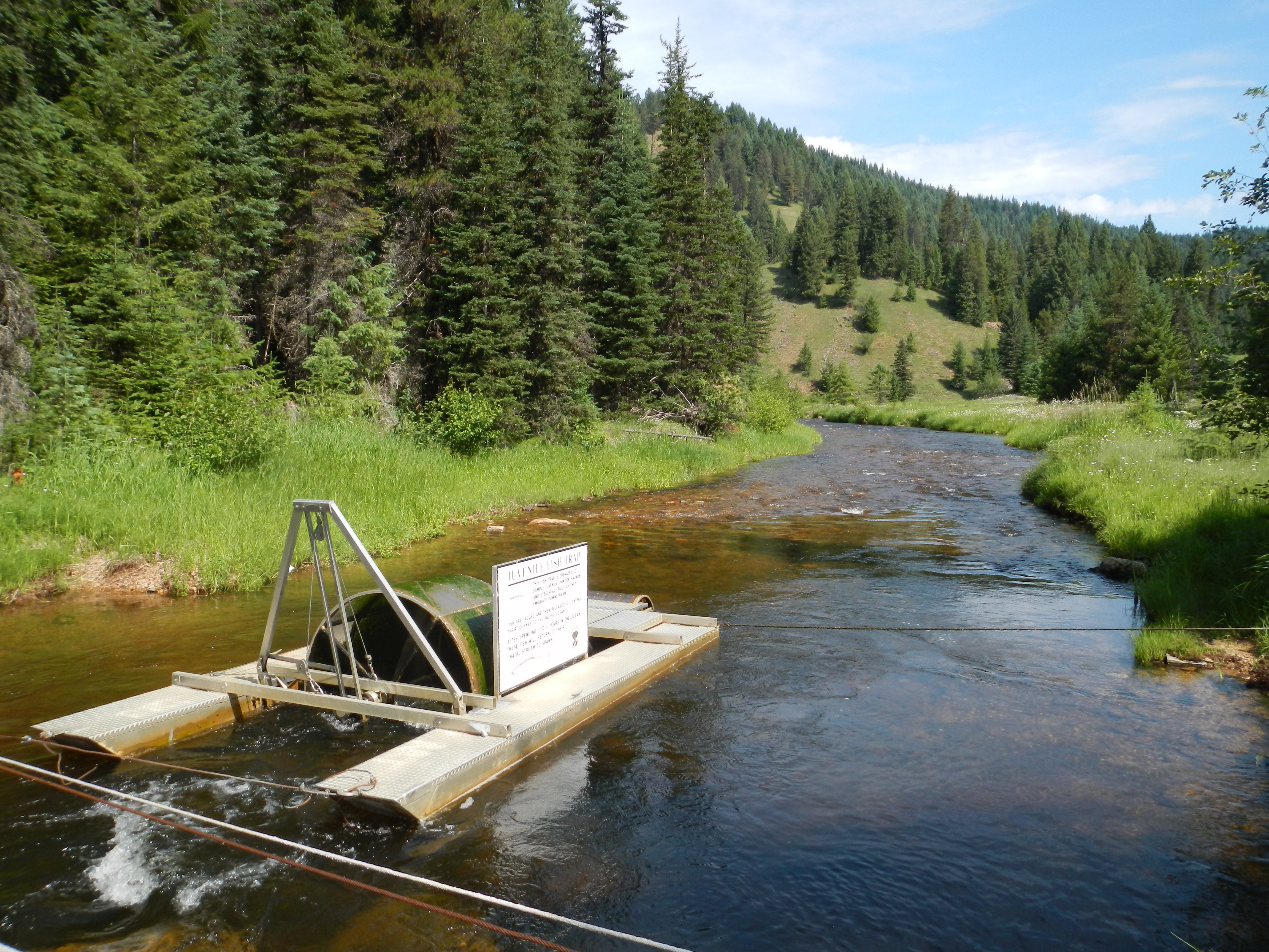 Rotary screw trap for anadromous migration from Crooked River, South Fork of the Clearwater