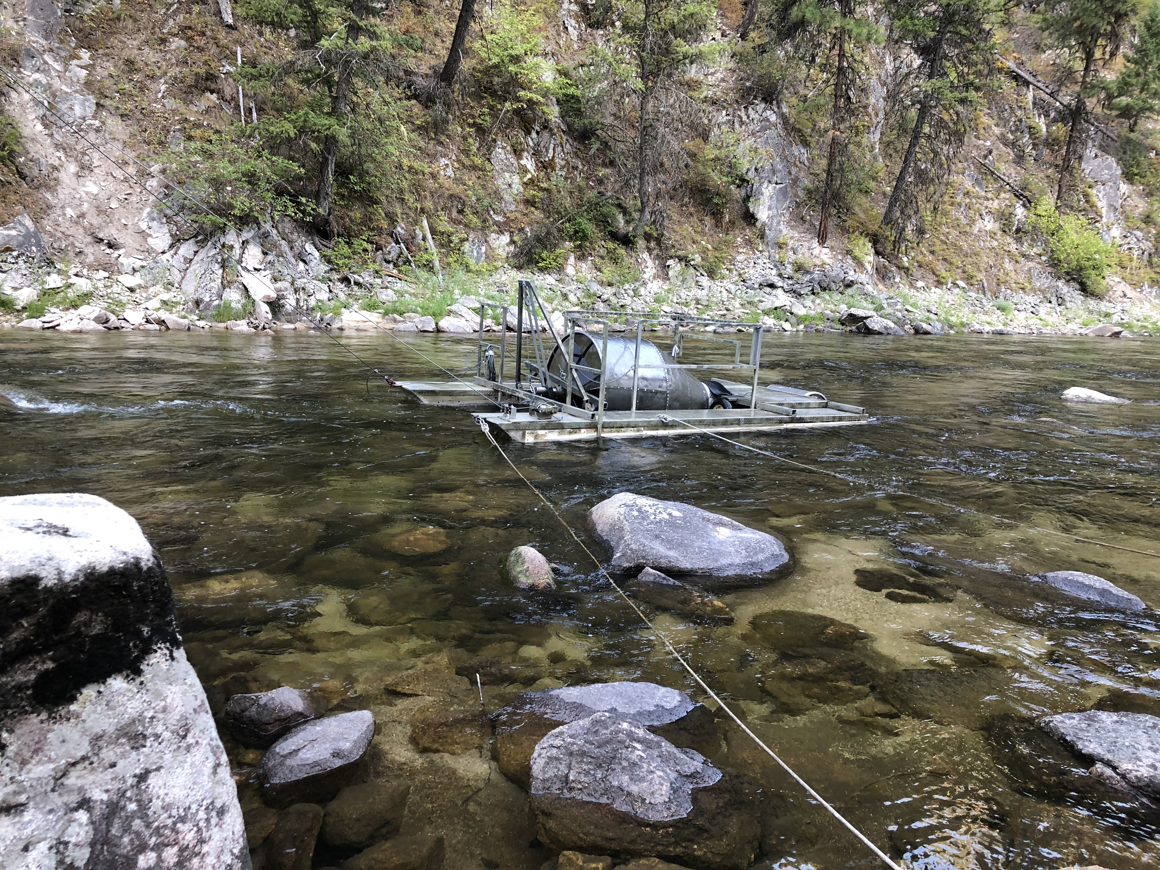 A rotary screw trap on the South Fork of the Salmon River