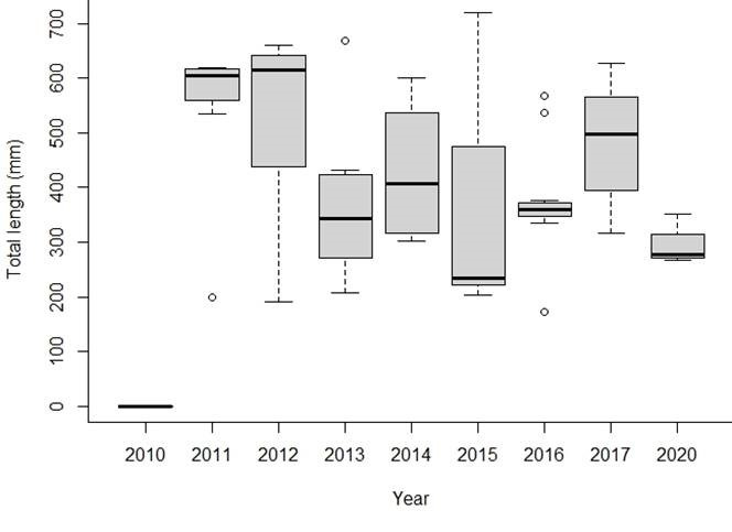 Figure 2. The total length (mm) of all Walleye caught using FWIN per year on Ririe Reservoir. The bold line in each box represents the median length for that respective year.