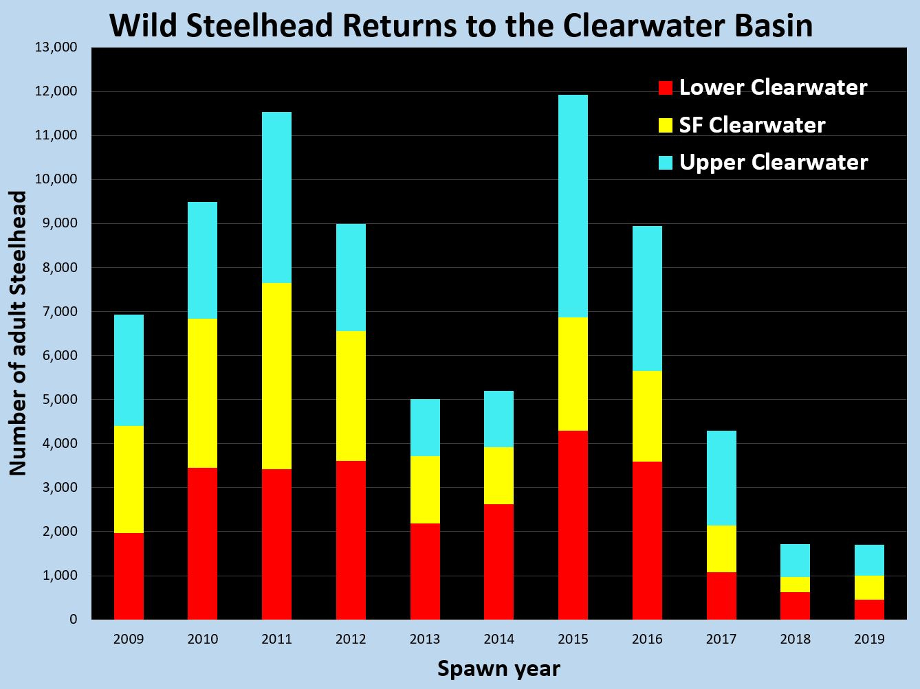 wild_steelhead_returns_to_the_clearwater