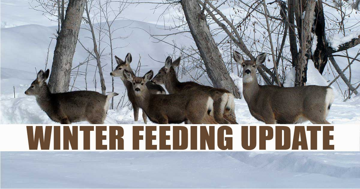Winter Feeding Update
