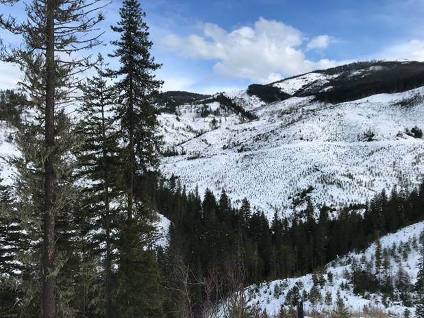 Managed forest in winter