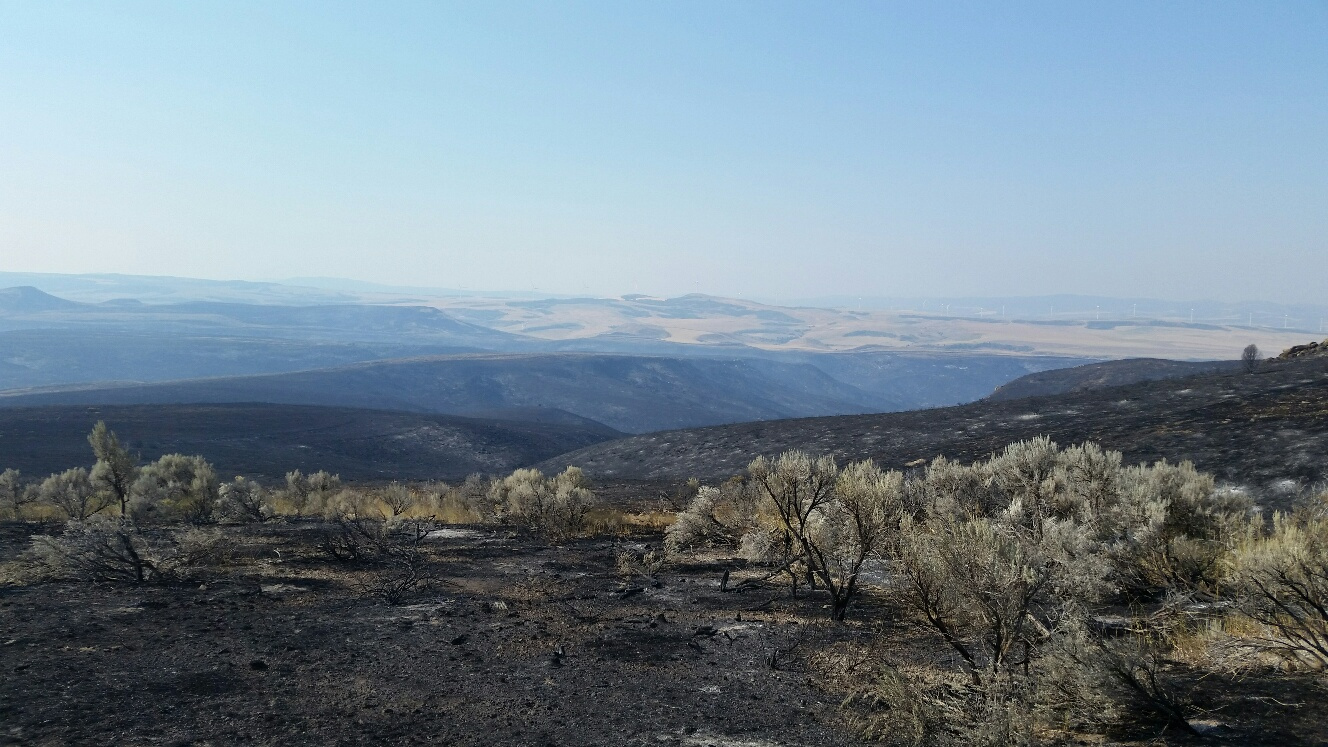 Tex Creek WMA, Henry's Creek Fire, Spring Canyon