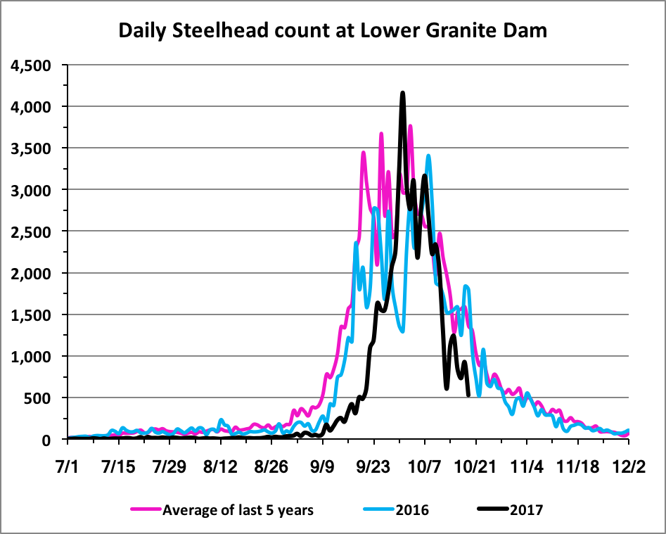 Steelhead count at Lower Granite Dam