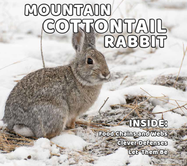 we-cottontail-cover