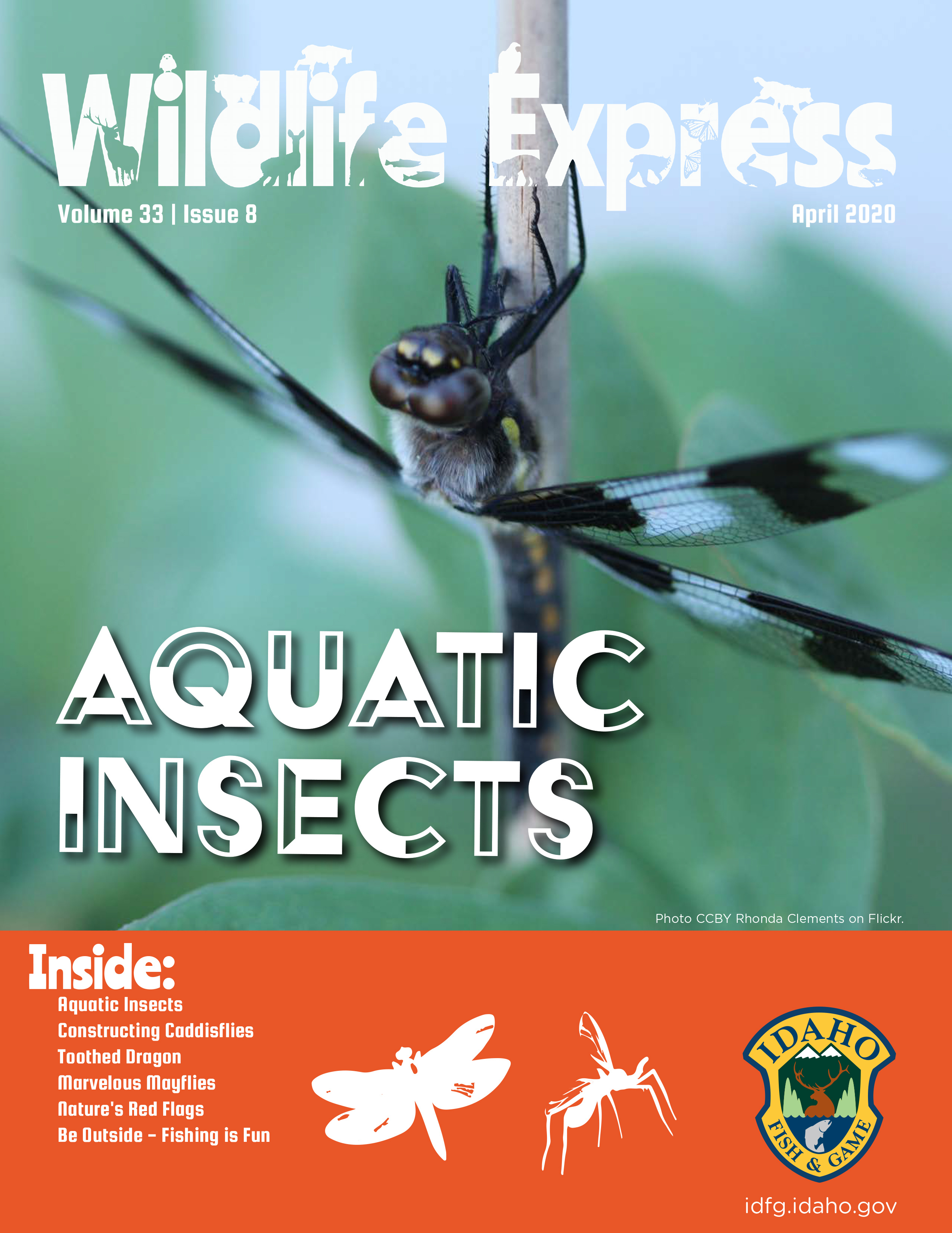 Wildlife Express Cover: Aquatic Insects