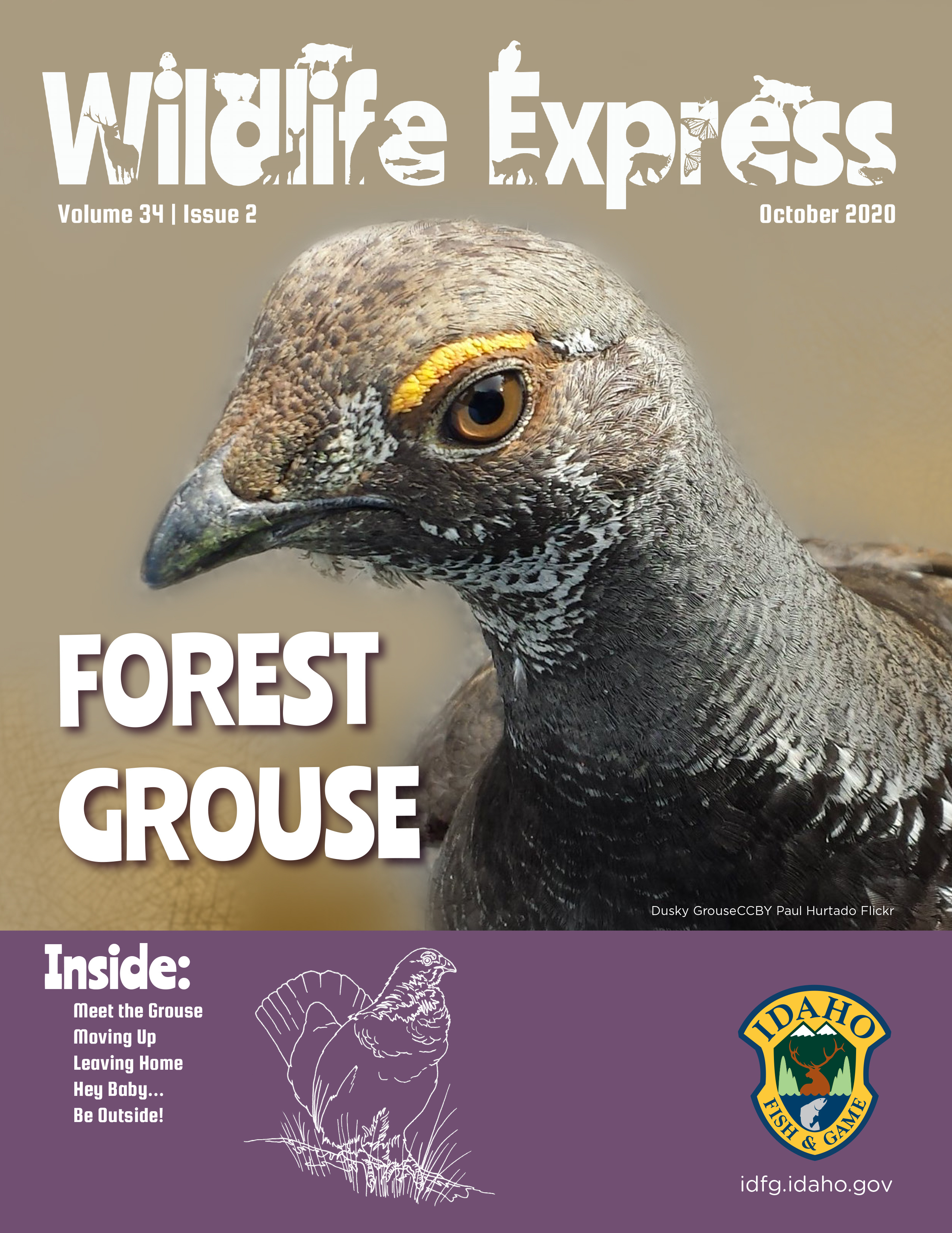 A forest grouse close up peering through one eye