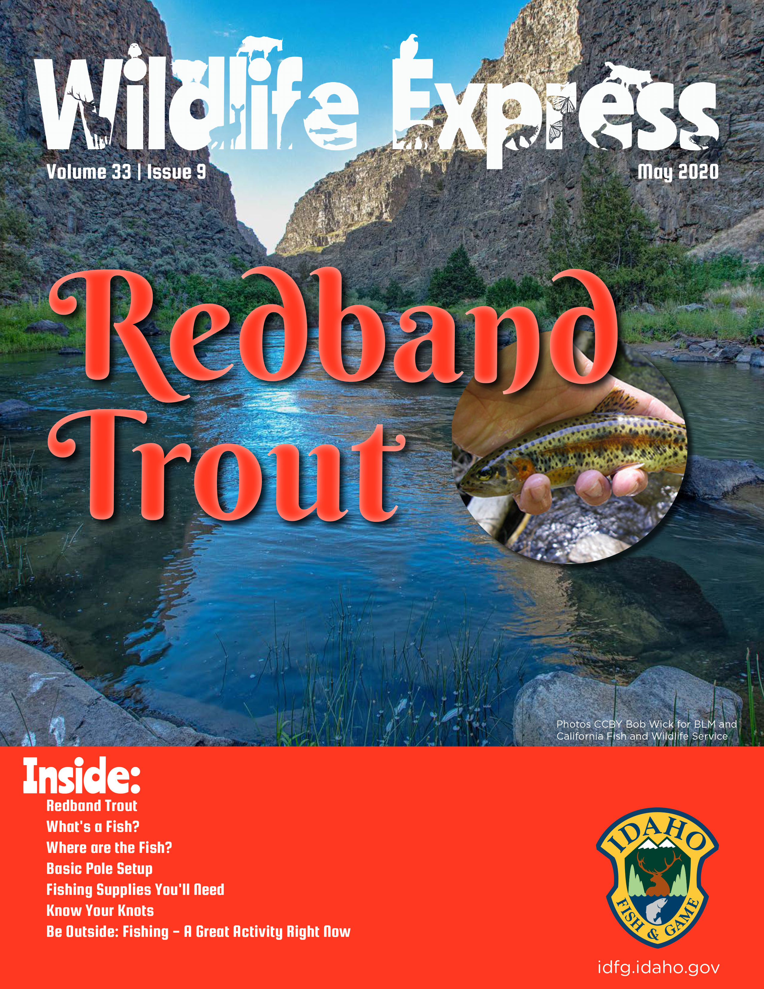 Wildlife Express Cover: Redband Trout