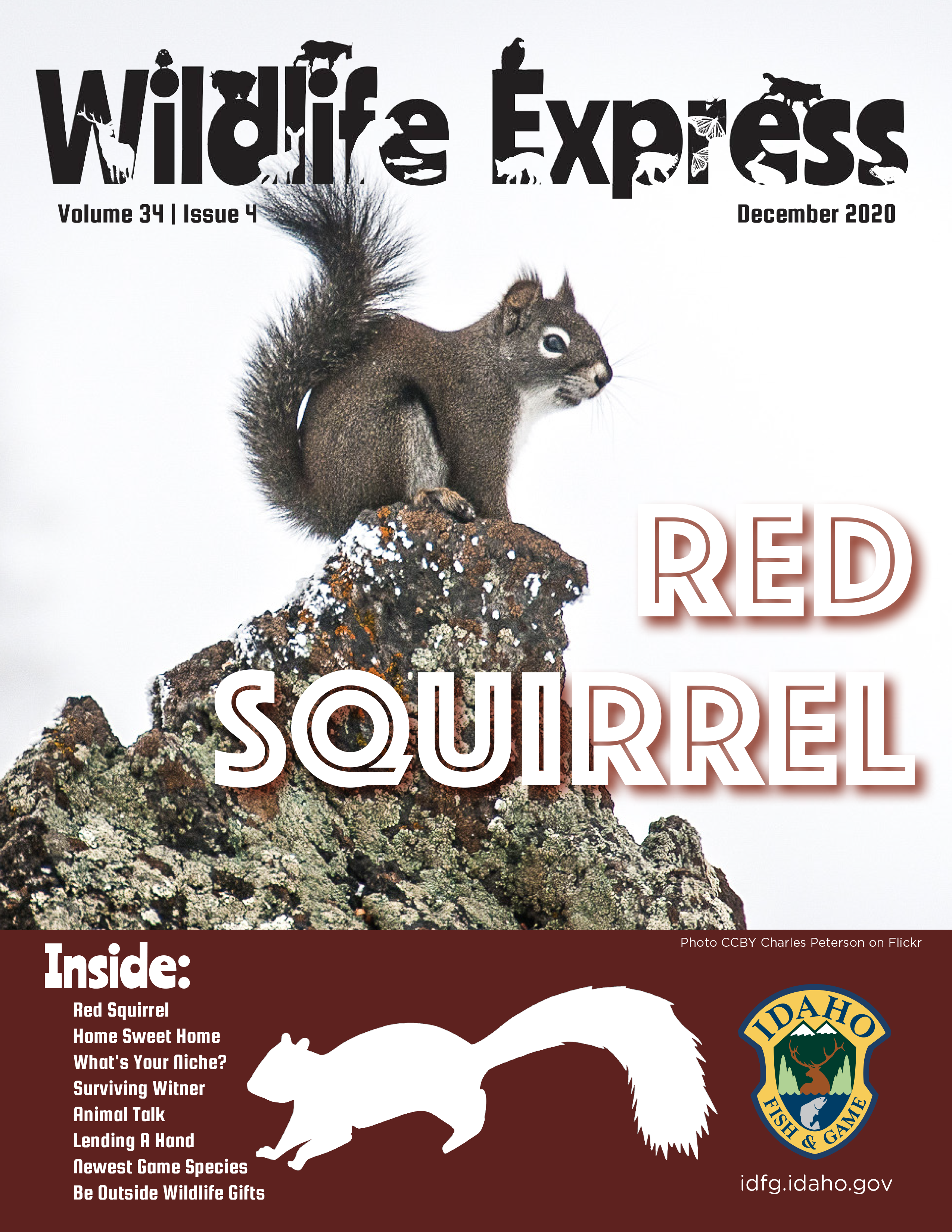 Wildlife Express magazine cover with a squirrel perched on a rock with the words Red Squirrel across the bottom.