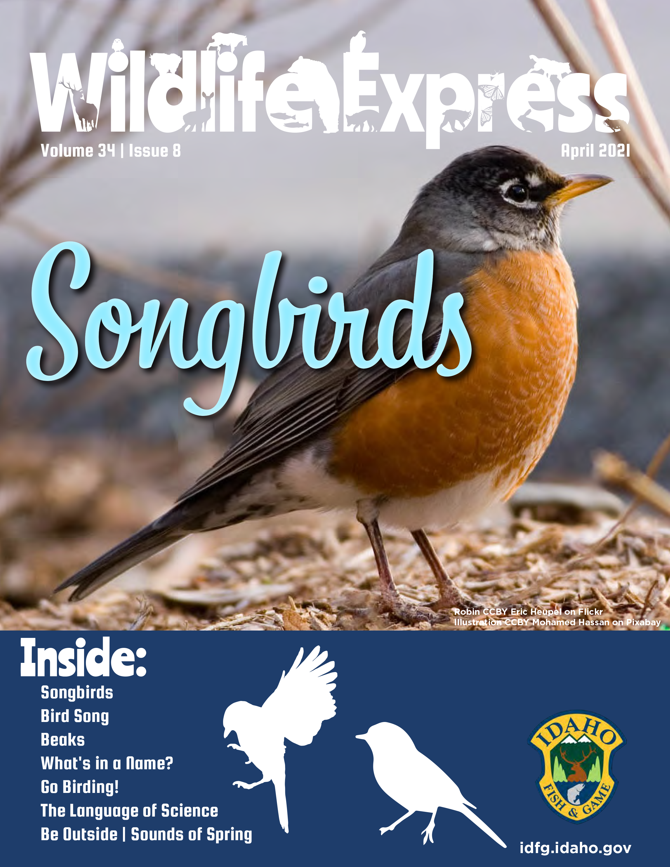 Wildlife Express magazine cover with a small songbird with silver wings and tan breast feathers standing on a pile of twigs.
