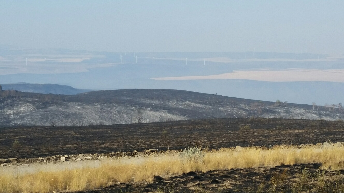 Tex Creek WMA, Henry's Creek Fire willow_creek_from_red_granary_site.jpg