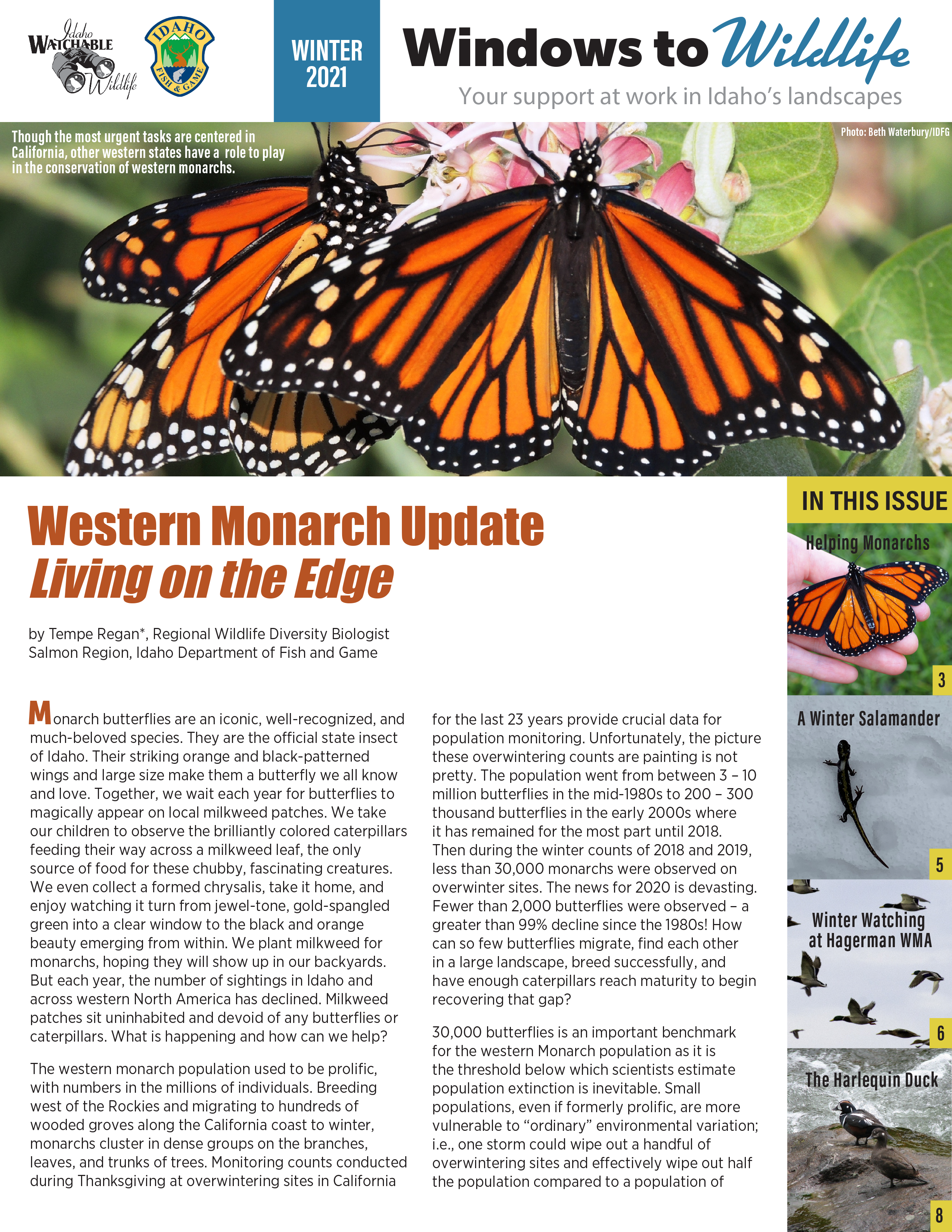 Windows to Wildlife newsletter cover with a large banner photo of Monarch butterflies