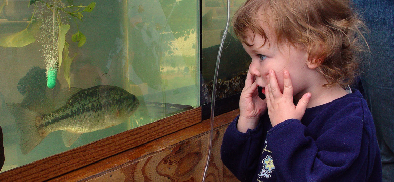 Young girl looking with amazement at a fish in an aquarium at the MK Nature Center in Boise September 2006