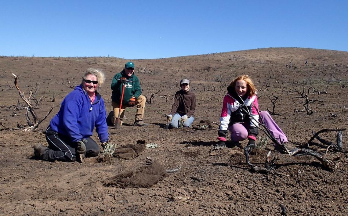 Volunteers Planting Seedlings after Fire