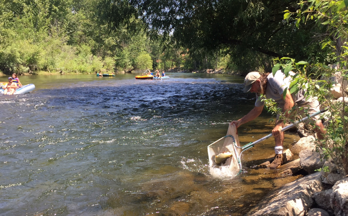 Chinook salmon released in the Boise River 2018