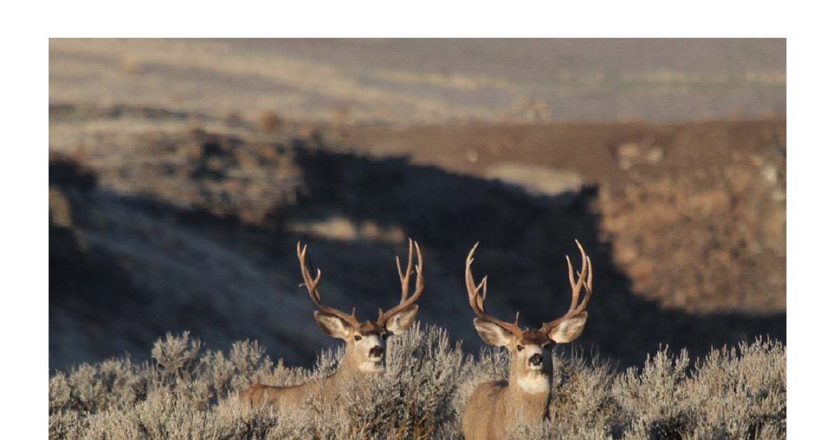 mule-deer-plan-draft-2020-cover