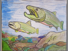 Bull trout coloring page