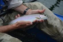 rainbow trout float tuber3o4iu3o