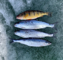 Ririe Ice Fishing