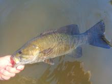 Lower Payette Smallmouth Bass
