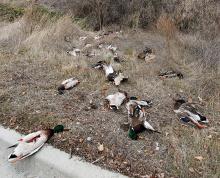 wasted_ducks_2_lr
